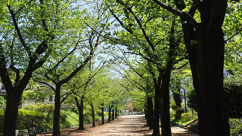 赤羽緑道公園終点