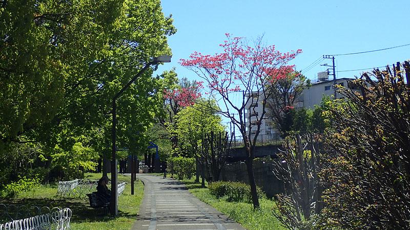 赤羽緑道公園ルート