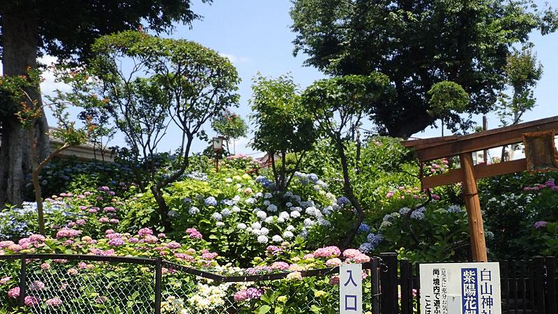 白山神社富士塚