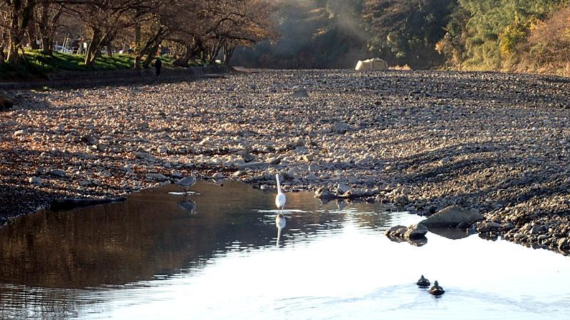 巾着田の冬の川岸