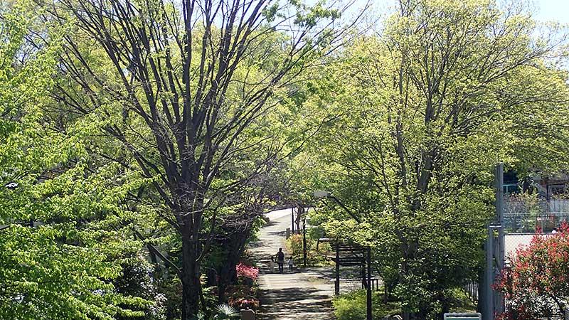 赤羽緑道公園俯瞰