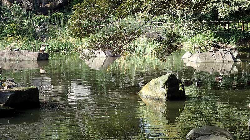 名主の滝公園の池