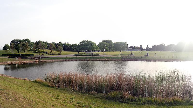 武蔵野の森公園大芝生広場