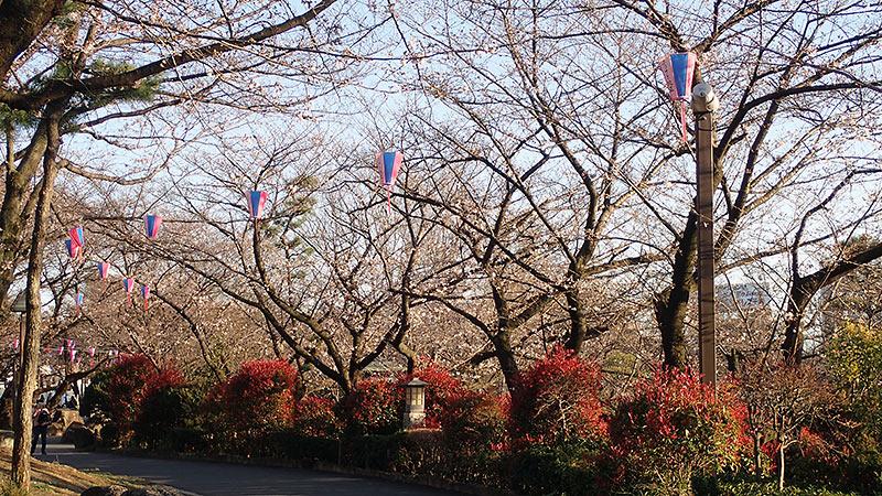 飛鳥山公園の桜並木